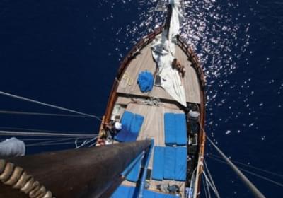 Agenzia/operatore Turistico Escursioni in Barca Guletta